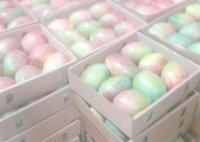 Kent mangoes