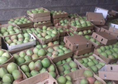 Mangoes 1